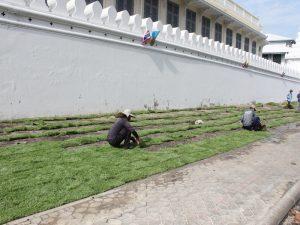 หน้าดิน คิวละ ดินปลูกต้นไม้ ปูหญ้า จัดสวน