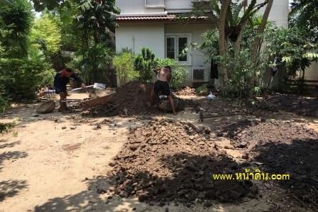 ดินปลูกต้นไม้ จัดสวน